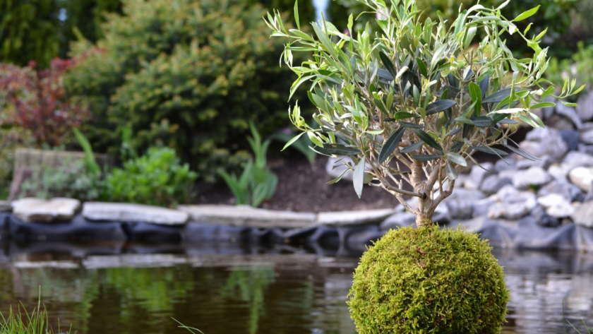 La culture japonaise à portée de main avec le kokedama fait maison