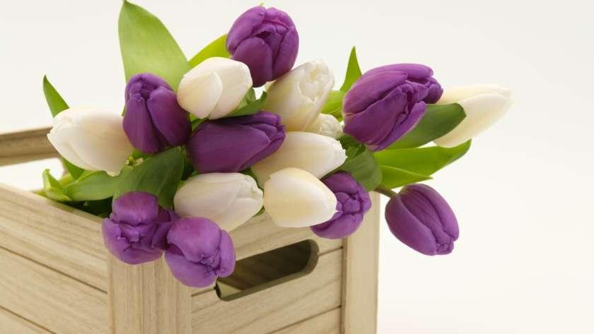 Comment choisir les fleurs en fonction de son logement ?